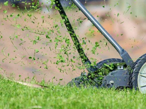 Aménagement des petits jardins résidentiels, guide sur les alternatives à la pelouse