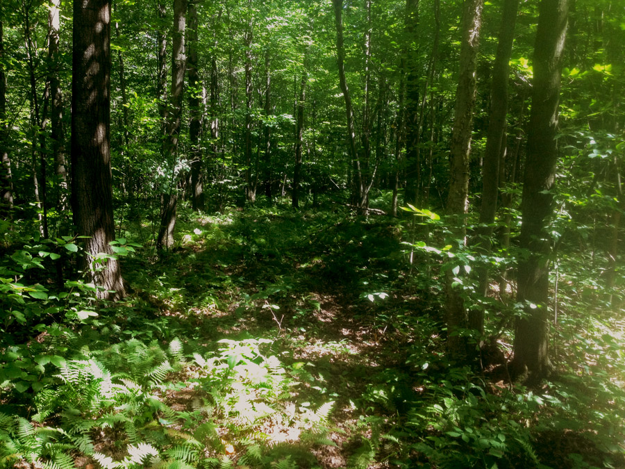 Conservation des milieux naturels à Saint-Alexandre